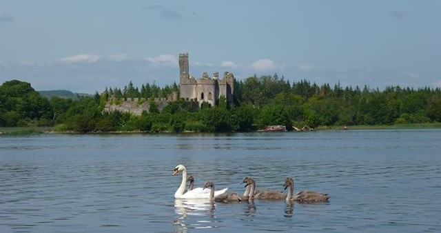 lough key forest park castle island with swans